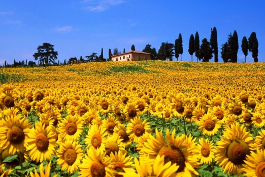 Tuscany is  Art, prolific artistic and culinary inspirations